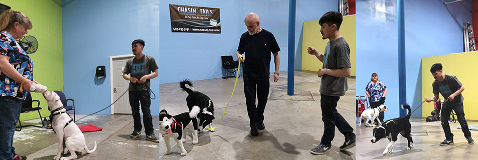 Chasin' Tails Dog Care Center – Dog Boarding, Grooming
